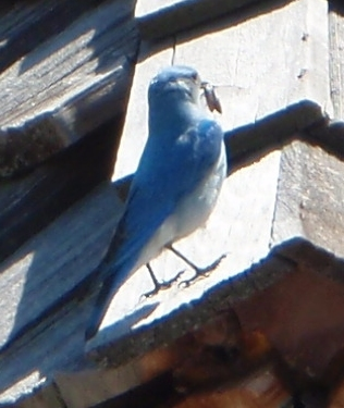 Blue bird but not sure what yet